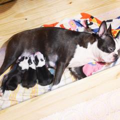 「寵物」喔唷與呼呼的3隻小萌犬來報到,Week1生活週記!