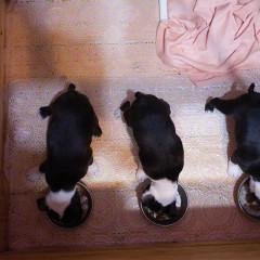 「寵物」喔唷與呼呼的3隻小萌犬來報到,Week7生活成長週記!