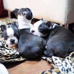 「寵物」喔唷與呼呼的3隻小萌犬來報到,Week8生活成長週記!