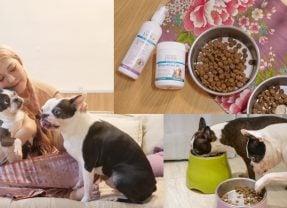 狗狗皮膚腸胃保健推薦 挑食狗也吃光光,澳洲PAW毛寶貝護理系列寶膚樂/寶腸樂/寶骨樂/敏感專用洗毛精